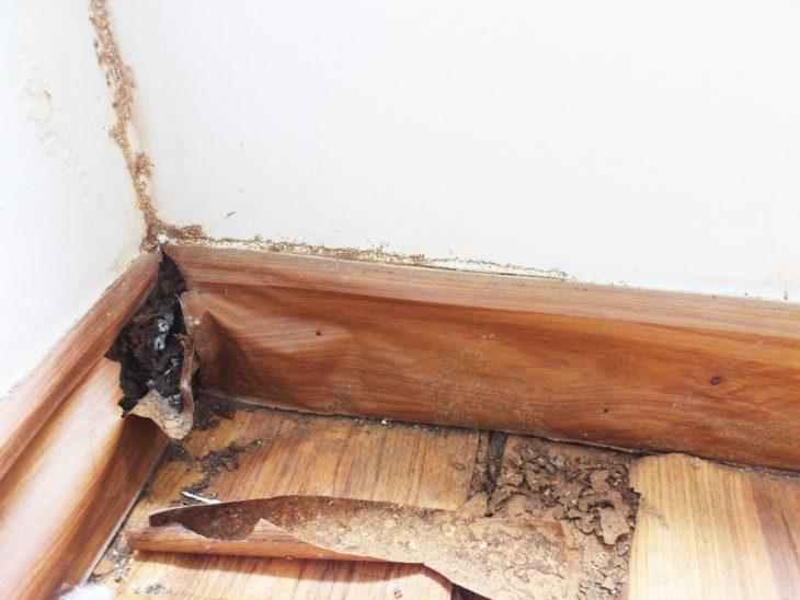雨漏りとシロアリの関係と駆除・防除費用の相場